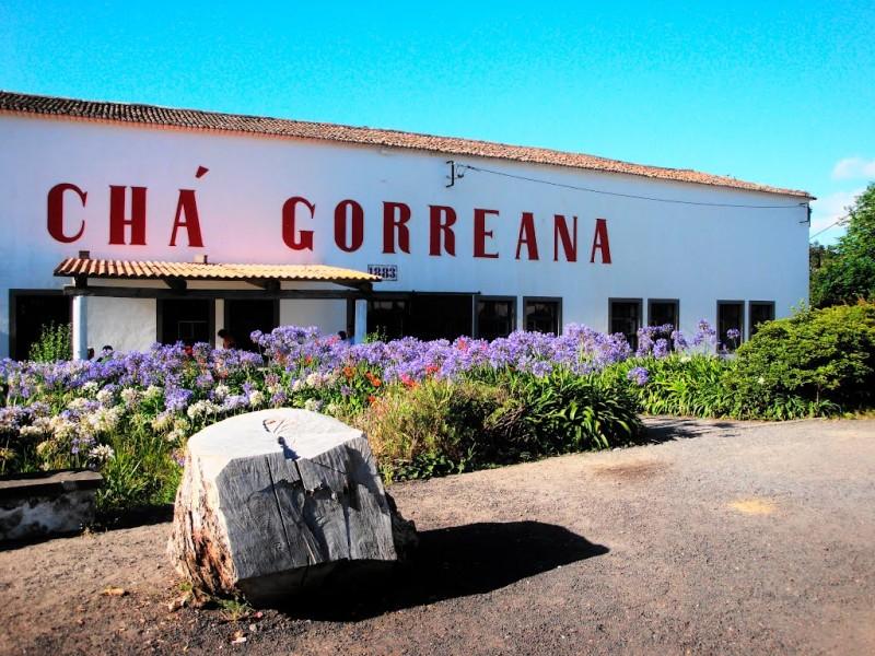 gorreana