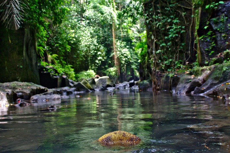 Jackfruit in Kanto Lampo waterfall, Bali