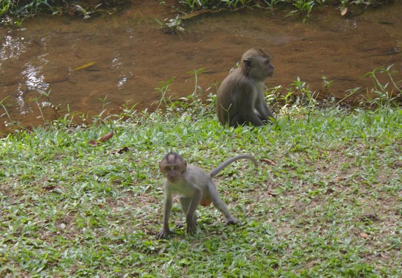 Baby monkey in Kuala Lumpur