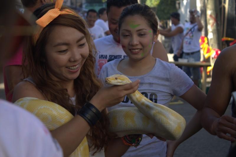 Python at Sinulog festival