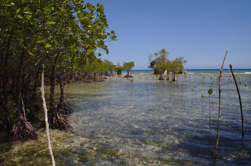 Marshland on the beach of Salagdoong