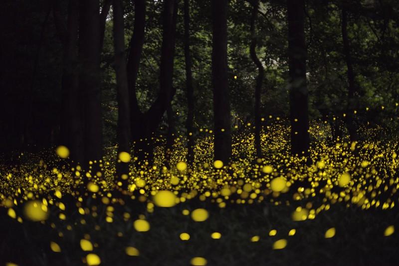 fireflies bohol loboc river