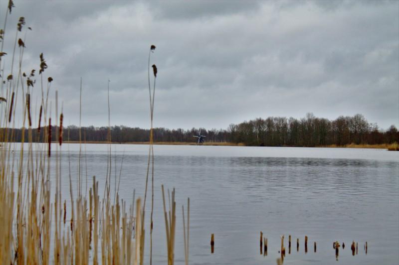 Groene Ster, Leeuwarden