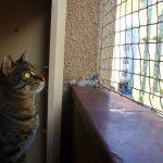 Muro the staring cat – Catsitting in Prague